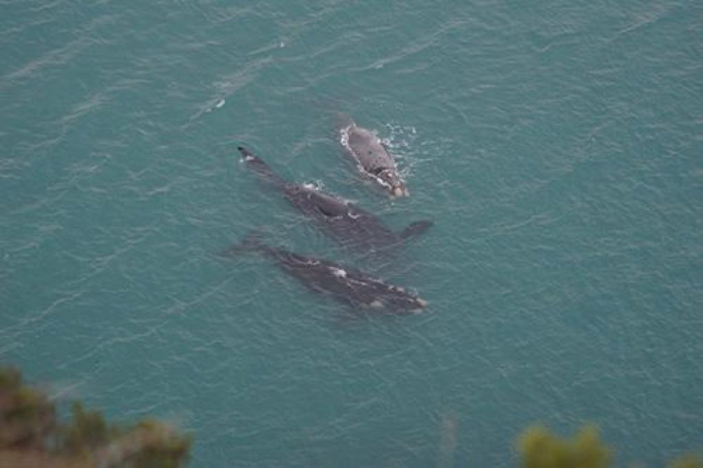 Whale Watching - Narrawong Island Holiday Park